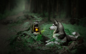 Смотреть обои Dog, Fern, Husky, Lantern, Pet, Animal