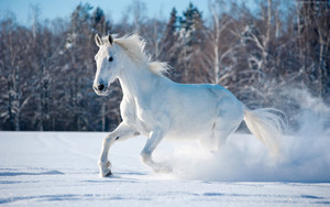 Смотреть обои Horse, Cute Animals, Snow, Winter