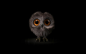Preview wallpaper of Baby Animal, Cute, Owl, Owlet