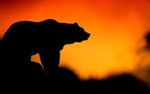 Preview wallpaper of Bear, Silhouettes, Vector, Sunset