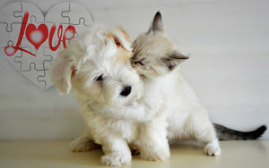 Preview wallpaper of Animal, Cat, Dog, Love, Playing