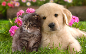 Смотреть обои Friends, Kitten, Puppy, Cuties