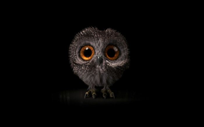 Wallpaper of Baby Animal, Cute, Owl, Owlet background & HD image