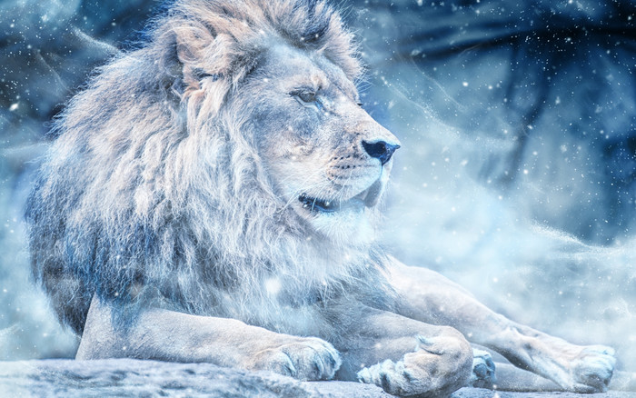 HD Wallpaper Big Cat, Lion, Wildlife, Predator, Animal