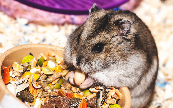 HD Wallpaper of Hamster, Eat, Funny, Cute, Rodent