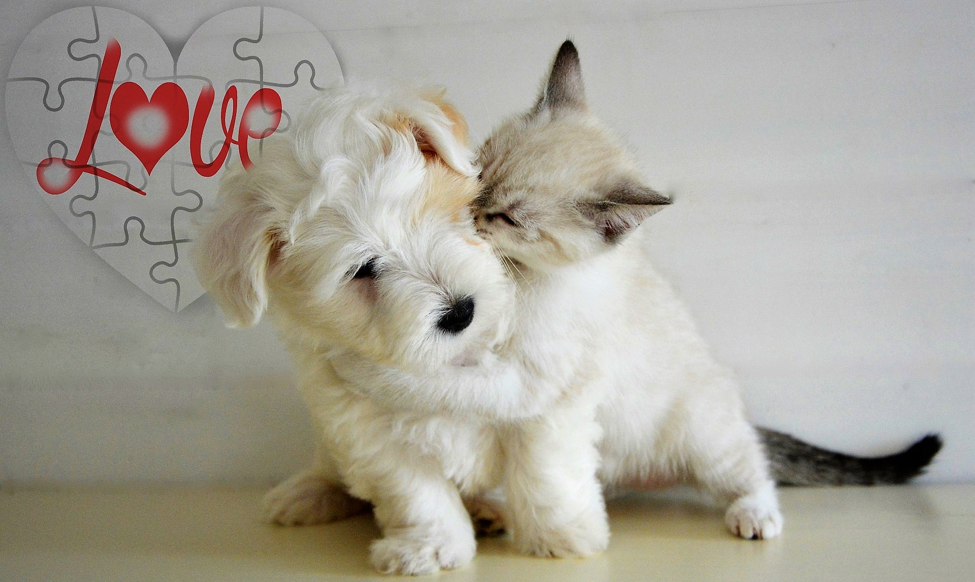Wallpaper Animal Cat Dog Love Playing Desktop Picture Hd Photo
