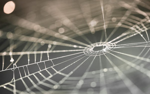 Preview wallpaper of Macro, Spider Web, Blur