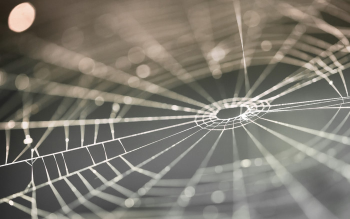 HD Wallpaper of Macro, Spider Web, Blur