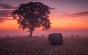 Preview wallpaper Field, Fog, Haystack, Sunset, Tree