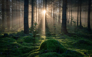 Preview wallpaper of Forest, Moss, Nature, Sunbeam