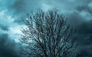 Смотреть обои Tree, Branches, Clouds, Evening, Darkness