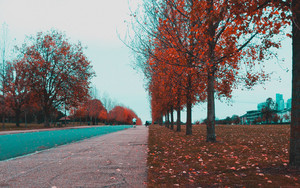 Preview wallpaper of Park, Alley, Contrast, Autumn