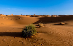 Preview wallpaper of Sahara, Desert, Sand, Sky, Bush