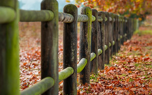 Preview wallpaper Depth Of Field, Fence, Leaves