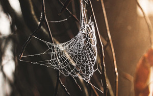Preview wallpaper of Spiderweb, Drops, Plexus
