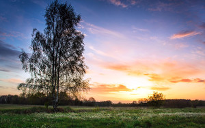 Preview wallpaper Field, Sunset, Tree, Nature