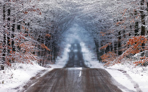 Preview wallpaper Forest, Road, Winter