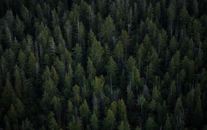 Preview wallpaper  Forest, <b>Trees</b>, View From The Bird's Flight