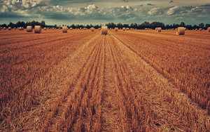 Preview wallpaper  <b>Field</b>, Wintage, Wheat, Hay, Grass