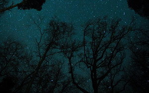 Смотреть обои Starry Sky, Trees, Bottom wiew, Night, Stars