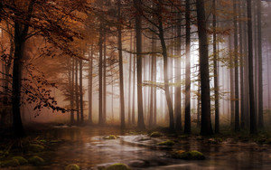 Смотреть обои Trees, River, Moss, Rays of Light, Forest