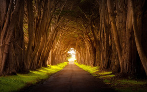 Preview wallpaper  <b>Nature</b>, Road, Tree, Tree-Lined