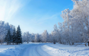 Смотреть обои Earth, Forest, Snow, Tree, Winter