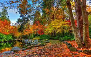 Preview wallpaper Earth, Fall, Foliage, Park, Tree