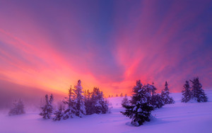 Preview wallpaper Sky, Snow, Sunrise, Tree, Winter