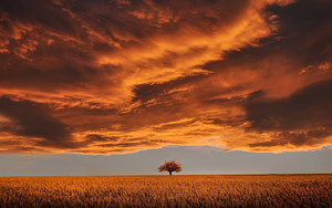 Preview wallpaper Cloud, Earth, Field, Orange, Sky, Tree