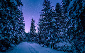 Смотреть обои Forest, Winter, Road, Starry Sky