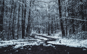 Preview wallpaper  Forest, <b>Trees</b>, Trail, Winter