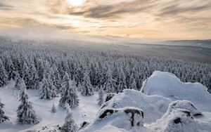 Preview wallpaper Forest, Landscape, Nature, Snow, Winter
