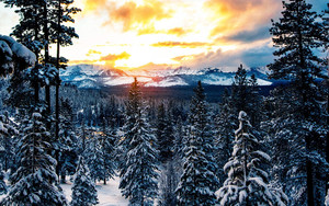 Preview wallpaper of Forest, Winter, Mountains