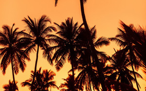 Смотреть обои Palms, Sunset, Trees, Leaves