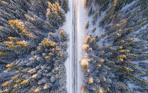 Preview wallpaper Nature, Road, Forest, Trees