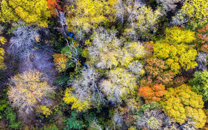Preview wallpaper colorful, autumn, trees, forest