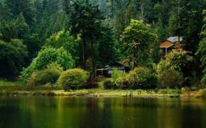 Preview wallpaper  Forest, <b>Trees</b>, Lake, House