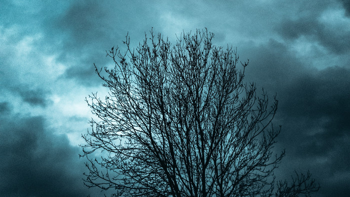 HD Wallpaper Tree, Branches, Clouds, Evening, Darkness