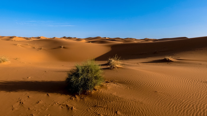 HD Wallpaper Sahara, Desert, Sand, Sky, Bush
