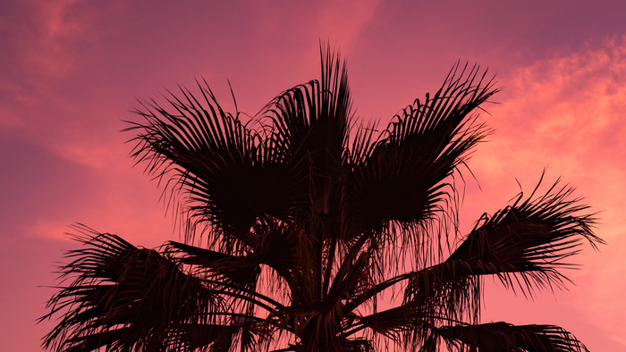 HD Wallpaper of Palma, Sunset, Sky, Branches