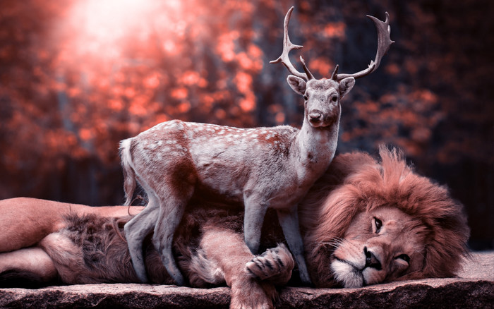HD Wallpaper of Leo, Deer, Wild Nature