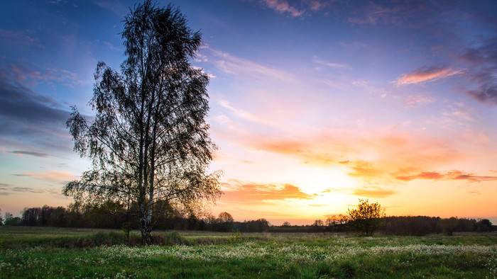 Field, Sunset, Tree, Nature Wallpaper. Download Nature (Природа) HD desktop background image