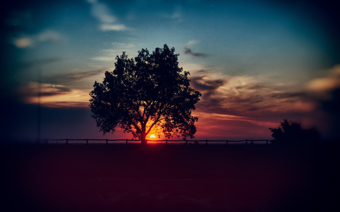 HD Wallpaper of Tree, Sunset, Clouds, Sky, Horizon