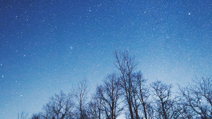 HD Wallpaper of Starry Sky, Trees, Night