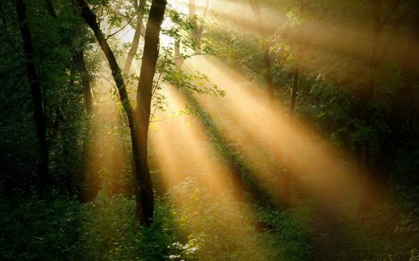 HD Wallpaper Forest, sun, rays, bushes