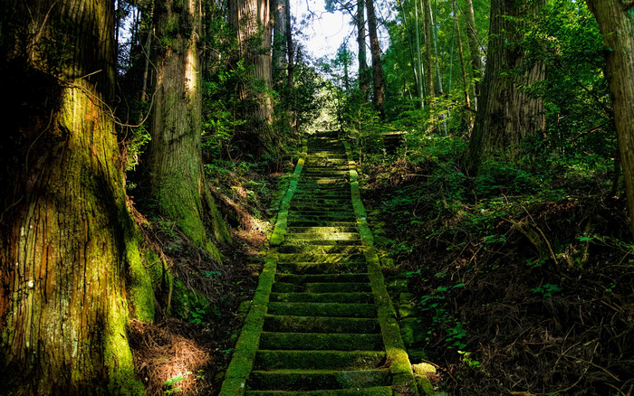 HD Wallpaper Stairs, Moss, Trees