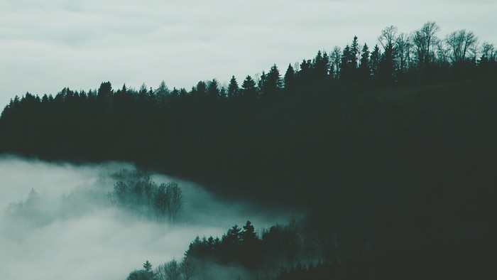 Wallpaper Of Forest Fog Trees Night Height Background