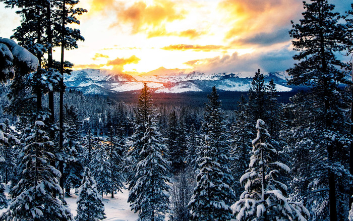 HD Wallpaper of Forest, Winter, Mountains