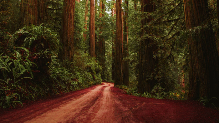 HD Wallpaper of Forest, Road, Trees, Moisture